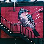 BIRD by James Burrough_