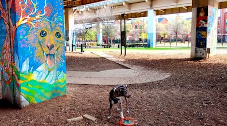 /wp-content/uploads/Deep  ellum  bark  park